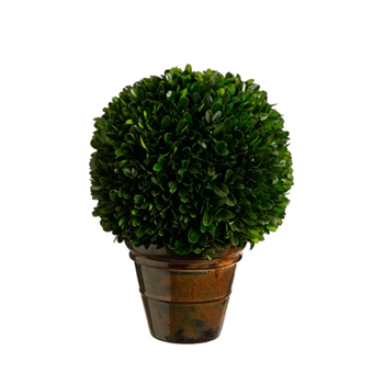 Boxwood Topiary 10in