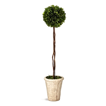Boxwood Topiary (Preserved) 30in