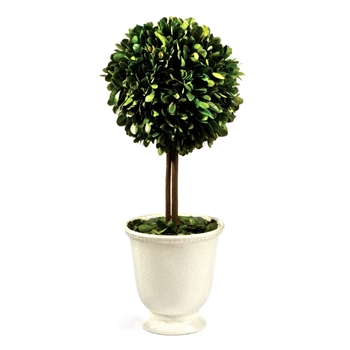 Boxwood Topiary (Preserved) 16in