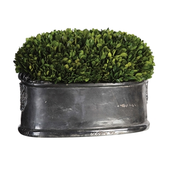 Boxwood Topiary (Preserved) 16W