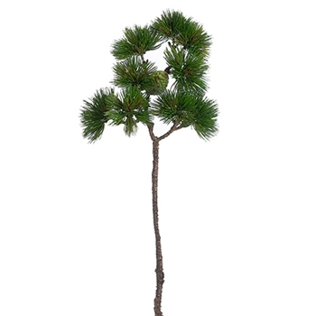 Pine w/ Cone 24in
