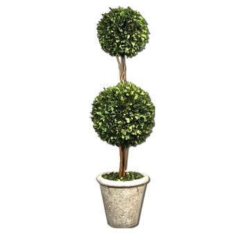 Boxwood Topiary 2Ball 10W/36H