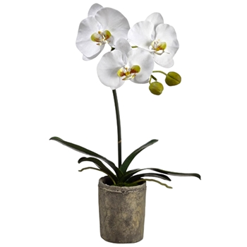 01. Phalaenopsis Orchid Potted White in Grey Pot 19IN