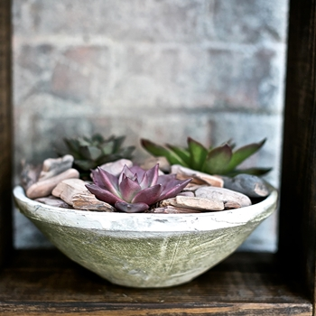 Bowl - Garden Rustic Oyster LG 10W/4H