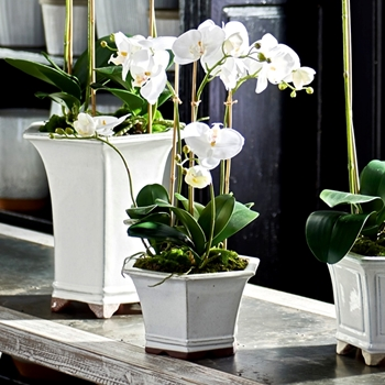 Phalaenopsis Potted Orchid White 9W/18H Barclay Butera