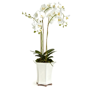 Phalaenopsis Potted Orchid White 12W/36H Barclay Butera