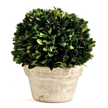 Boxwood Preserved Topiary Ball 7W/8H