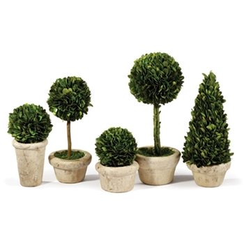 Boxwood Preserved Topiary Ball 4W/5,7,8H  ASST SM