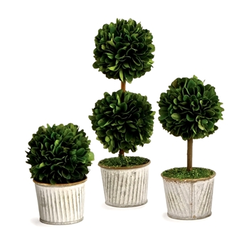 Boxwood Preserved Topiary Ball 2.5W/5/7/9H Set3