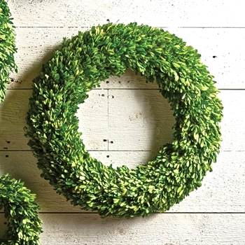 Boxwood Preserved Wreath Round 24in