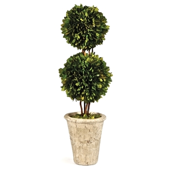 Boxwood Preserved Topiary 2Ball 8W/18H