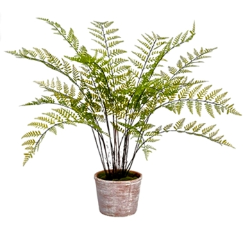 Fern - Bracken 35in - Terracotta pot
