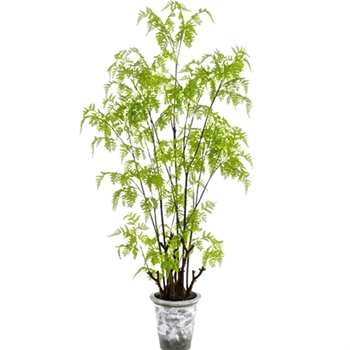 Fern Tree Lace 62in White Wash Grey Pot