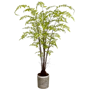 Fern Woodland Giant 76in Grey Pot
