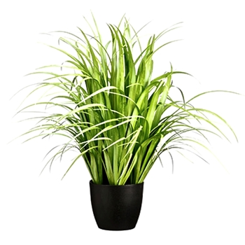 Grass - Reed Plant 38in Black Pot