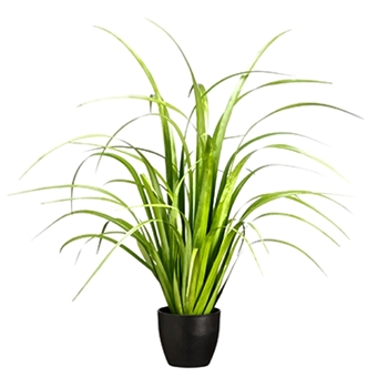 Grass - Reed Plant 33in Black Pot