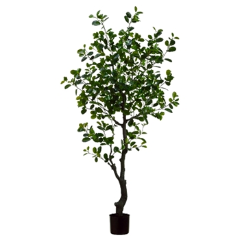 Ficus Tree Eva 72in Plastic Pot