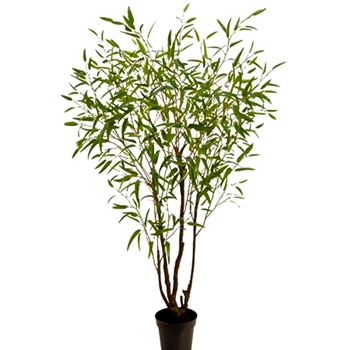 Bamboo Leaf Tree 90in Plastic Pot