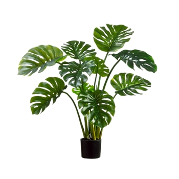 Philo Split Leaf Plant 39in 9 Leaf Black Pot