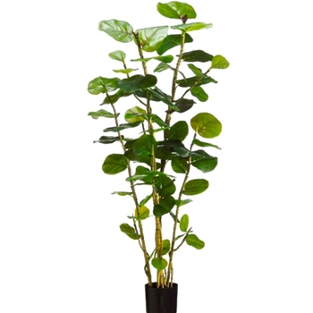 Sea Grape Tree Green 60in