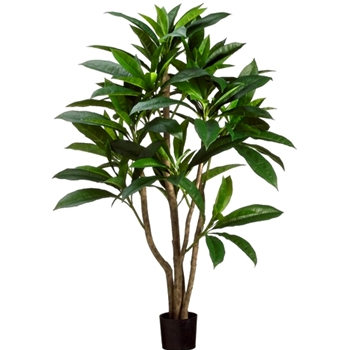 Plumeria Tree Green 2 Tone 48in
