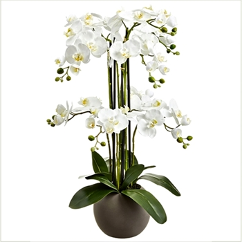 Phalaenopsis Potted Orchid White 33in Globe Pot