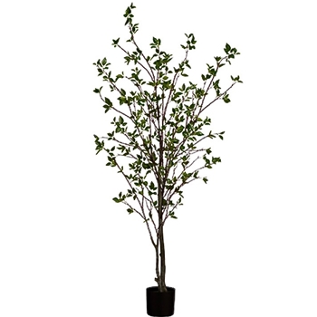 Cornus Tree 72in Green