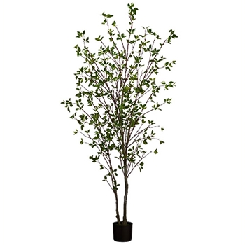 Cornus Tree 84in Green
