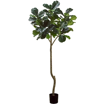Fiddle Topiary Tree 84in Green
