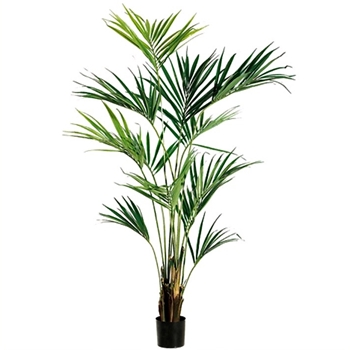 Kentia Palm Tree Green Lt 93in