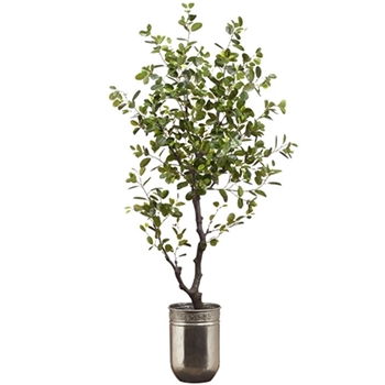 Ficus Tree Eva Silver Planter 72in