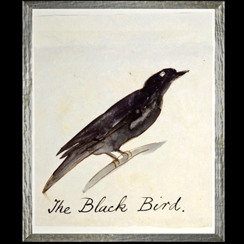 17W/21H Framed Print - Lear Black Bird