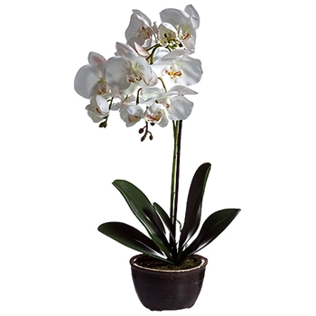84. Phalaenopsis Potted Orchid Blush Pink 20H