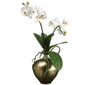 01. Phalaenopsis Potted Orchid White In Brass Jug 24H