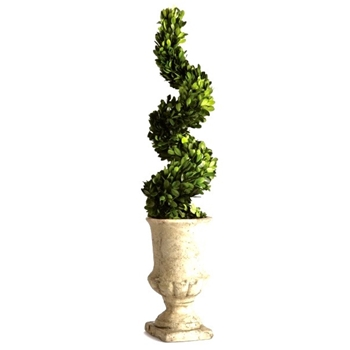 Boxwood Preserved Topiary Spiral 7W/27H
