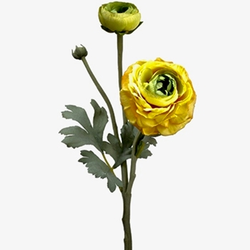 67. Ranunculus Yellow 15in