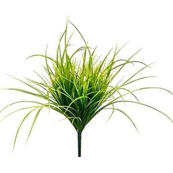 54. Grass Carex Weeping Bush Lime 19in