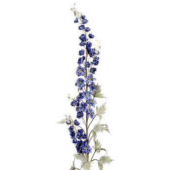 31. Delphinium Blue Giant 76in
