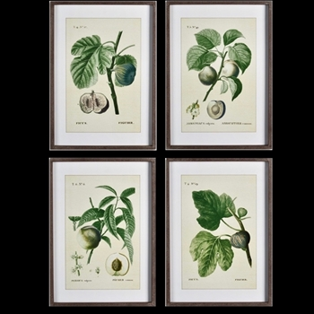 20W/28H Framed Print - Fruits Green