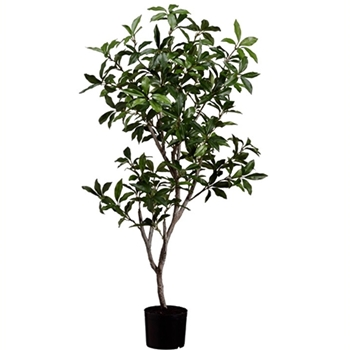 Laurel Tree 4ft