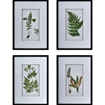 20W/28H Framed Glass Print - Ferns AST 4
