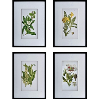 20W/28H Framed Glass Print - Botanical White Matt