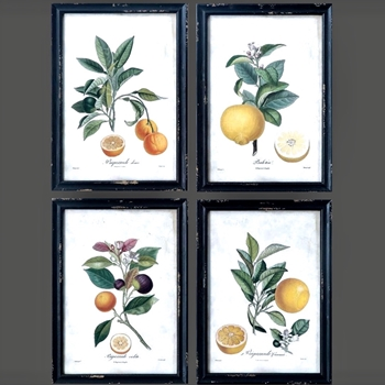 14W/19H Framed Print - Citrus Fruits