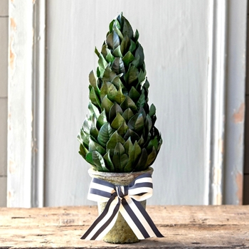 Laurel Topiary Cone W/Bow 16IN