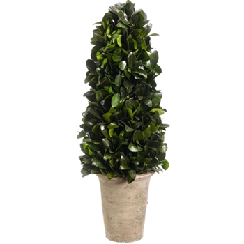 Preserved Tea Leaf Cone Topiary 20in