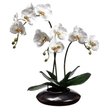 01. Phalaenopsis Orchid Potted White in Bronze Bowl 22IN
