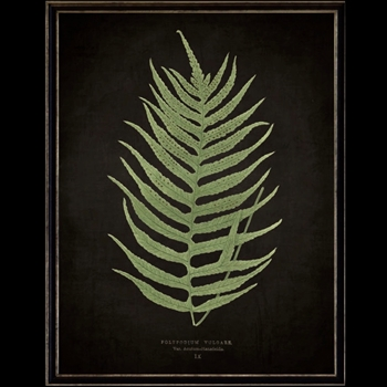 13W/17H Framed Glass Print Fern F Black