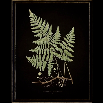 13W/17H Framed Glass Print Fern D Black