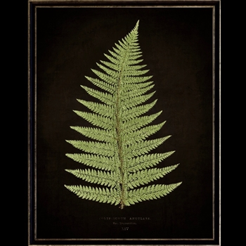 13W/17H Framed Glass Print Fern B Black
