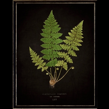 13W/17H Framed Glass Print Fern L Black